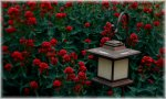 lampka ogrodowa